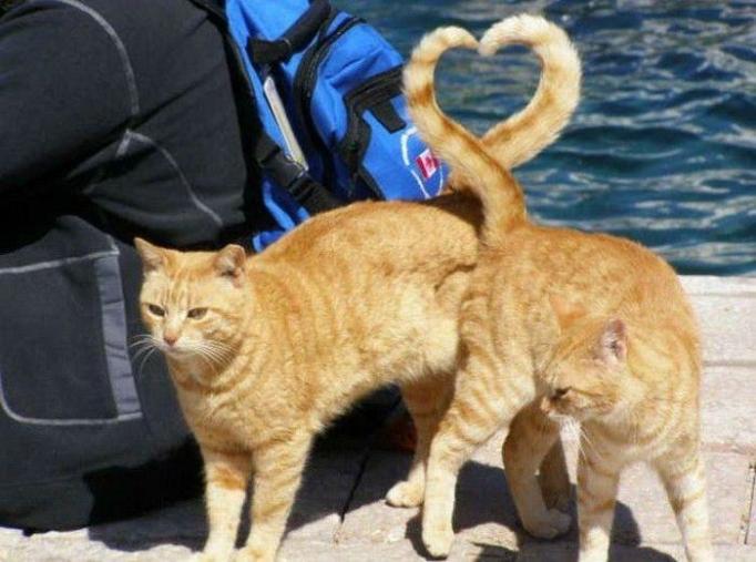 Снимки домашних котов, сделанные в нужный момент (25 фото).  Все владельцы домашних животных уплотнения...